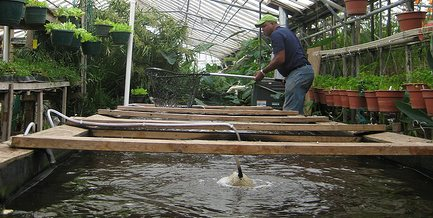 Fish farming at home to save money planting dollars for Wisconsin fish farms